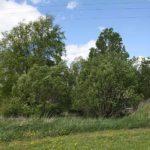Berka, Grundstück mit Holzhaus